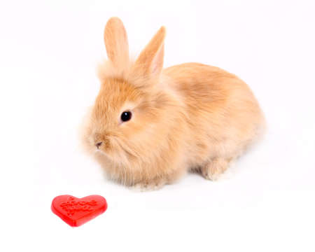 Curious young rabbit with red heart  photo