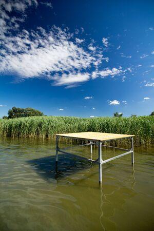cane creek: Beautiful reed in lake Balaton