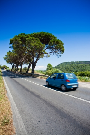 pine tree alley street avenue in Slovenia with car Stock Photo