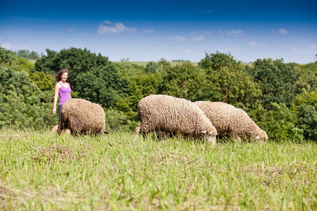 Lambs grazing in a green field photo