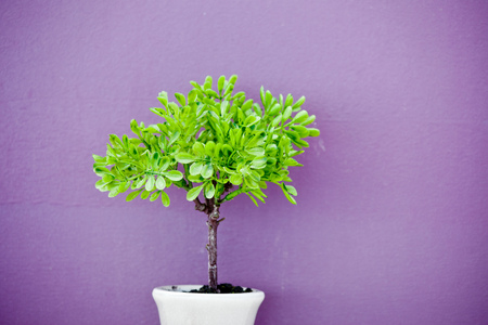 small tree over purple background photo