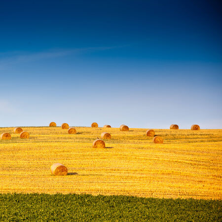 green wheat: Beautiful landscape with straw bales