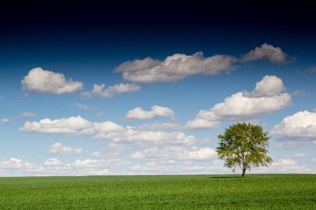 lone: beautiful landscape and lone tree