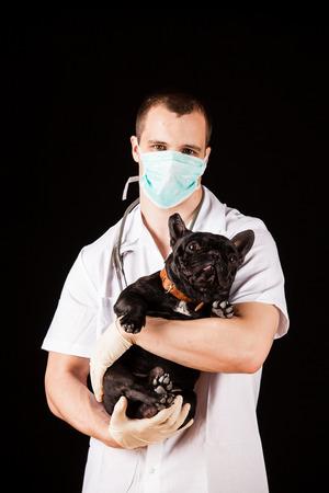 animal doctor: Animal doctor with french bulldog