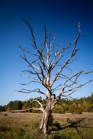 scenery set: lonely dead dry tree
