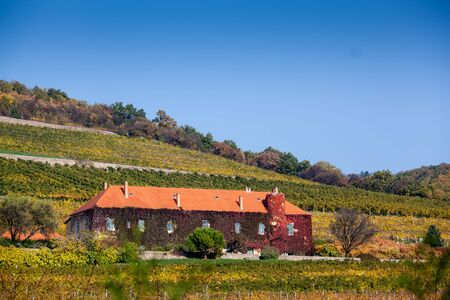 pecs: Vineyard with building in Pecs, hungary
