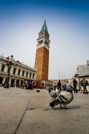 san marco: San Marco Campanile with pigeon Venice, Italy Stock Photo