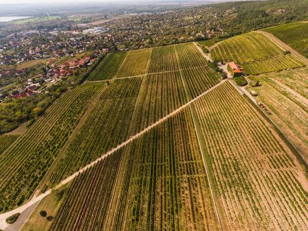 Vineyard from bird eye view with blue sky
