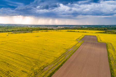 Rape field with stormy sky
