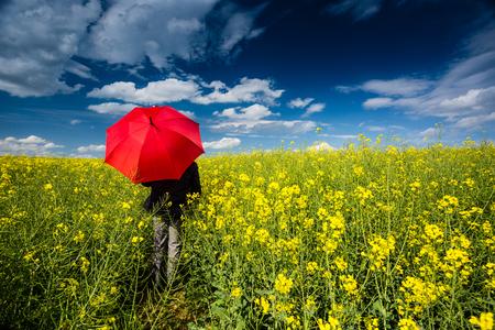 canola: Businessman in rape field with umbrella