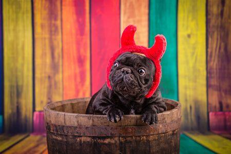 french bulldog wearing devil horn