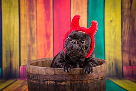 french bulldog wearing devil horn