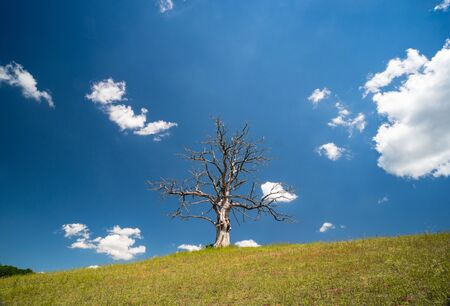 lonely dead dry tree on a hill