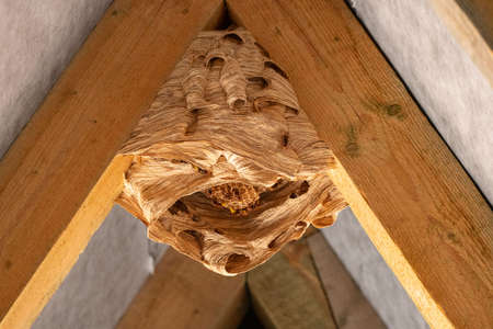 hornet nest under a wooden roof Banco de Imagens