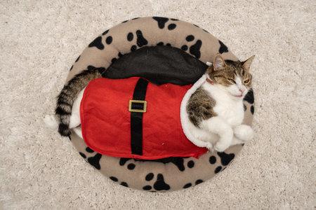 Cat wearing santa costume at home