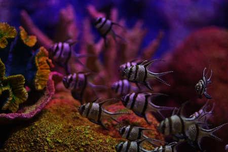 freshwater aquarium plants: fish in aquarium