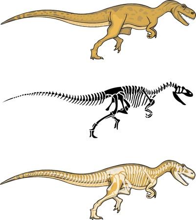 paleontologist: Allosaurus with matching Skeleton Illustration