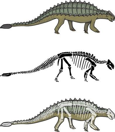 paleontologist: Ankylosaurus with matching Skeleton Illustration