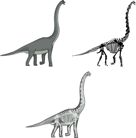 Brachiosaurus met bijpassende Skeleton