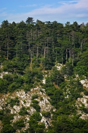 Rocky dark green pine forest on the side of mountain at clear sky photo