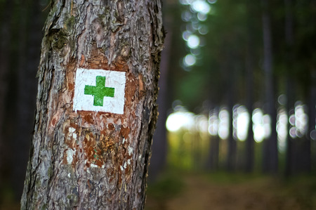 Tourist green cross road sign to hikers in the dark pineforest Stock Photo