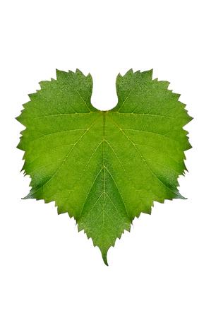 Heart shaped fresh green grape leaves Stock Photo