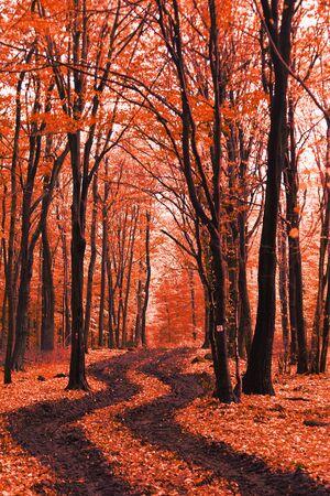 autunno nel bosco e lo sfondo