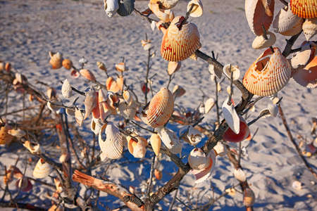 Seashells hanging from a washed up tree on Port Boca Grande beach at the southern end of Gasparilla Island, Florida USA