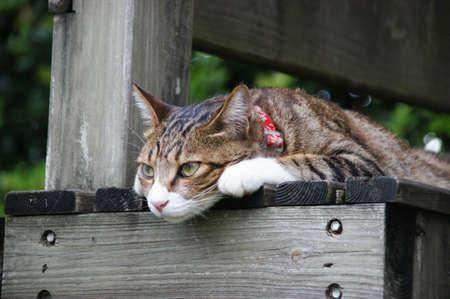silla de madera: Gato en la meditaci�n silla de madera