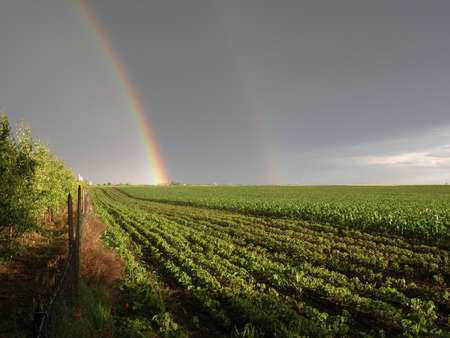 Beautiful double rainbow in a field