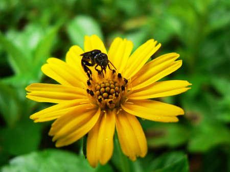 la cosecha de miel de abeja  Foto de archivo - 3246031