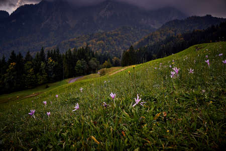 Autumn mood on the meadow