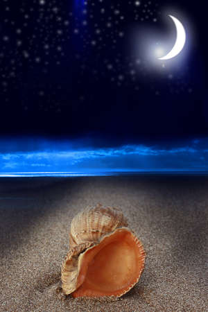Night in a shell by the sea Banque d'images