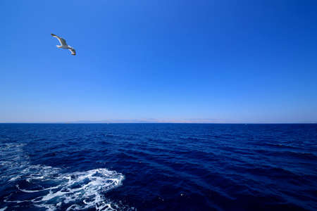 A seagull flying In blue sky background. Imagens