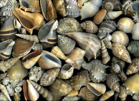 Arrangement of many vibrant seashells on sunny beach