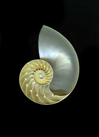 chambered: Chambered nautilus isolated on black background Stock Photo
