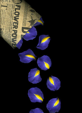Vibrant blue iris petals isolated on black background