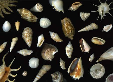 Arrangement of many vibrant seashells isolated on black background Stock Photo