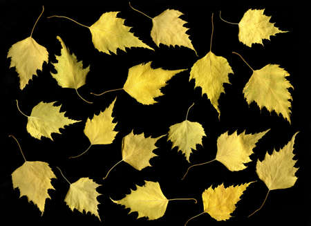 Arrangement of Autumn leaves isolated on black background