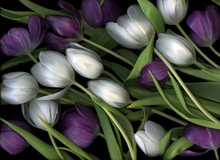 Purple and white tulip arrangement