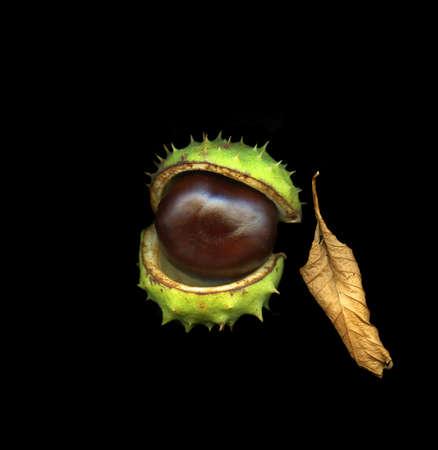 Single chestnut isolated on black background