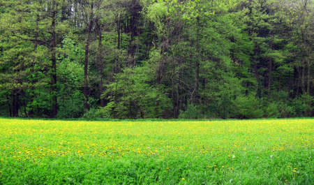 Lush meadow on the edge of a forest in Austria