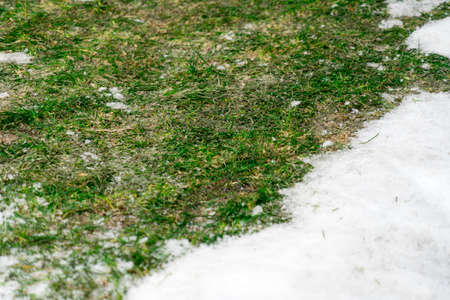 Photo of snow on the green grass