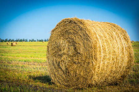 Collecting hay from the field. Hay for feeding farm animals. Collecting hay from the field. Hay for feeding farm animals.