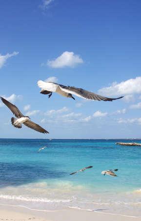caribe: birds in cancun, mexico