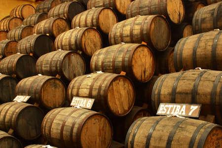 agave: producci�n de tequila en tequila, Jalisco, mexico