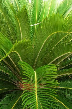 riviera maya: palma de la mano en el jard�n de un hotel con detalles como la hacienda en Canc�n, Riviera Maya, Quinatan Roo, Mexico, Am�rica Latina