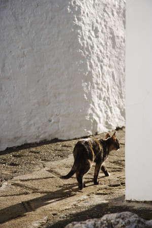 andalusien: Katze in Gaucin, Andalusien, Spanien