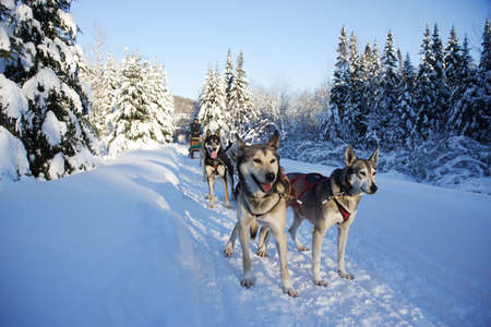 dogs in Quebec, Canada