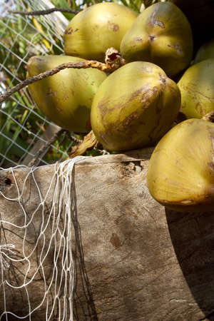 jalisco: detail of fresh coconuts in a wooden bowl in Puerto Vallarta, Jalisco, Mexico Latin America Stock Photo